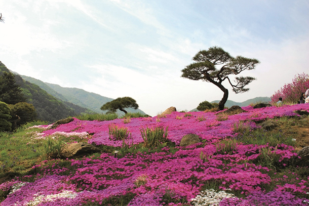 Jeju Island: South Korea's Beauty Hotspot